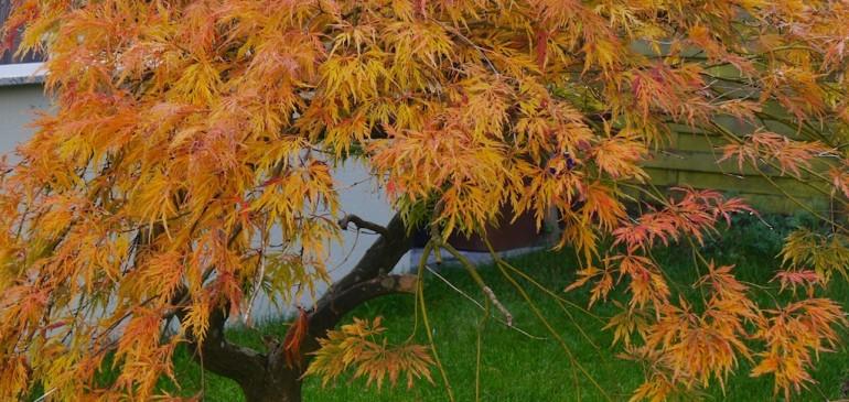 Herbststimmung am Bodensee